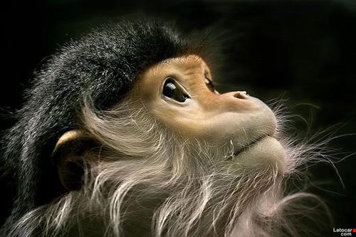 趣味壁纸:超美动物摄影 (6)